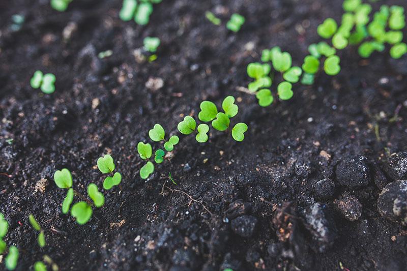 Környezetvédelem: kötelezettségek és megoldások mindenkinek